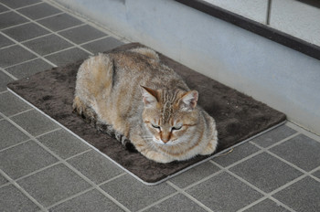 CAT 044_1.JPG