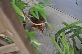 CAT 045_1.JPG