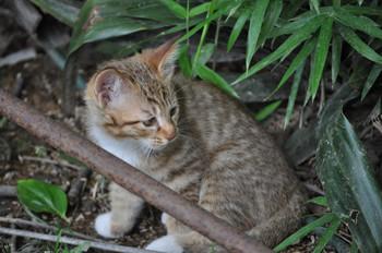 CAT 072_1.JPG