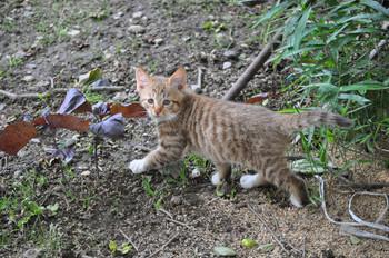 CAT 073_1.JPG
