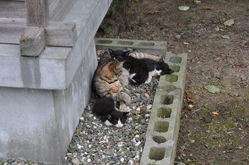 CAT 099_001.JPG