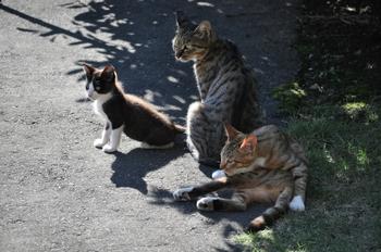 CAT 103_01.JPG