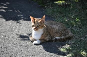 CAT 106_01.JPG