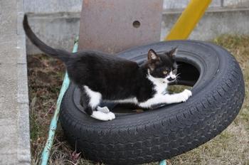 CAT 120_01.JPG