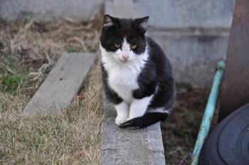 CAT 122_01.JPG