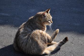 CAT_267_002.JPG