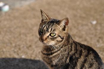CAT_269.JPG