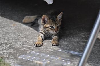 CAT_271.JPG