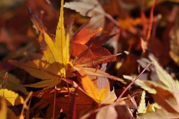 koyo_2012_003.JPG